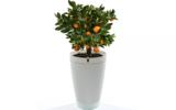 Parrot Pot - Zelf watergevende bloempot - Wit